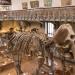 La force des contrastes Muséum