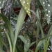 Serres du jardin des plantes 28-09-20