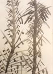 c bambous (12).jpg