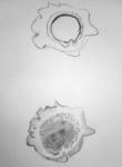 dessiner au jardin des plantes,dessiner la nature,dessiner les fleurs,cours de dessin,galerie de botanique