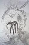 dessiner dans les serres du jardin des plantes, dessiner les arbres,