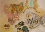 papillons, inspiration, croquis, aquarelle, couleur, dessin, Paris,