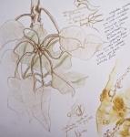 1 organiqsue et plante Maud M. 14:01:06 - 2.jpg
