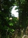 stage de dessin,stage de peinture,stage d'aquarelle,dessiner en auvergne,peindre en auvergne,ebreuil,hameau de chavagnat,cours de dessin,cours d'aquarelle,dessiner la nature,dessienr sur le motif,dessienr le paysage