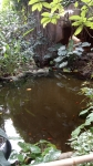 muséum, serre tropicale, jardin des plantes, dessin, art,