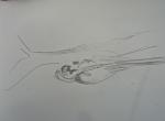 M.2014:10:?? Muriel oiseaux - 1.jpg