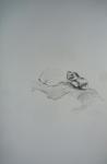 dessin au crayon, encre de chine, dessiner les plantes, muséum, dessin à l'encre, dessin au jardin