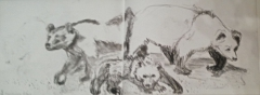Muséum, exposition espèces d'ours, dessiner les animaux, croquis sur le vif,
