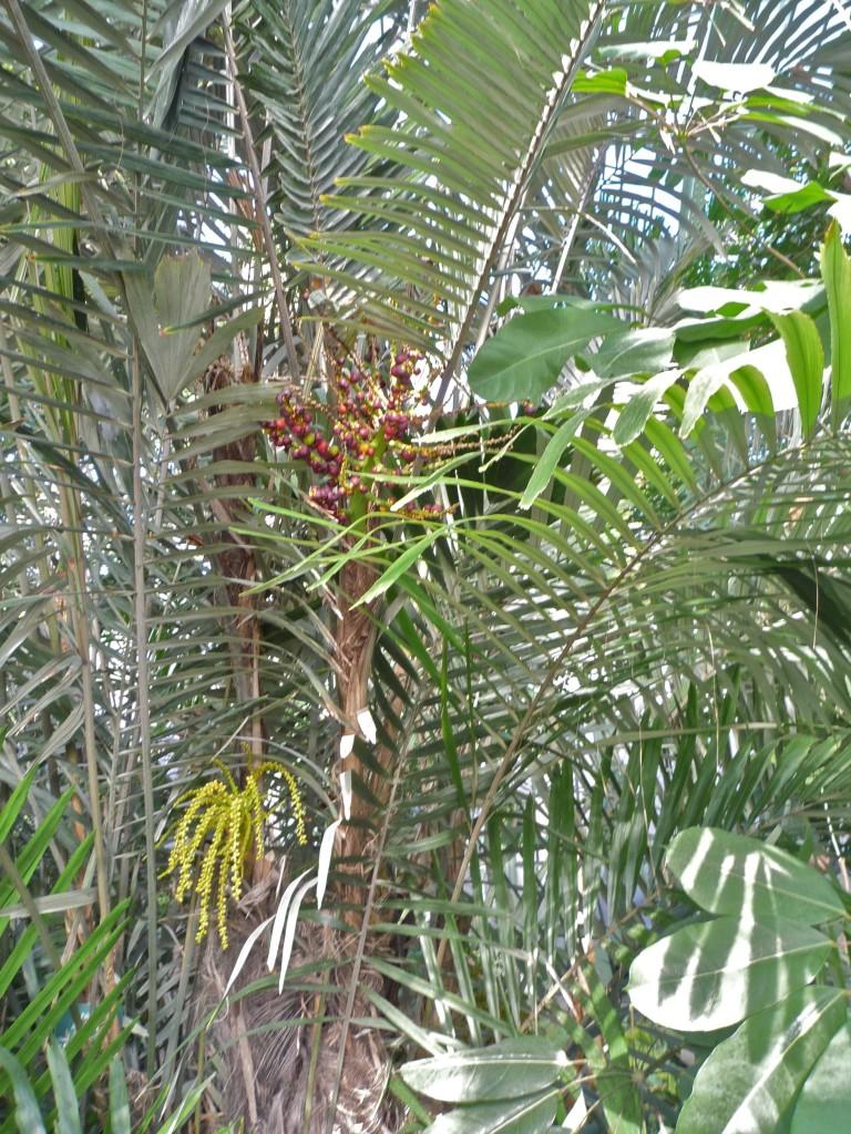 Dans les serres du jardin des plantes maj couleur for Jardin du plantes