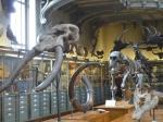 cours de dessin, jardin des plantes, galerie de paléontologie, muséum,