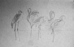dessiner les flamands, dessiner à Paris, cours de dessin à Paris, dessiner la nature, cours de dessin sur le motif, ménagerie, dessiner au muséum, flamand rouge,