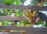 Dessiner au muséum, dessiner les fleurs, cours de dessin, cours d'aquarelle, dessienr dans les jardins, jardin des plantes, serres tropicales, muséum, dessiner au muséum,