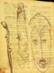 arts premiers,art d'afrique,art d'océanie,dessiner au louvre,louvre,pavillon des sessions