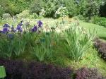 dessiner la nature; desiner les fleurs, dessiner les iris, jardin des plantes, dessiner sur le vif, dessiner d'après réel, cours de dessin, cours d'aquarelle