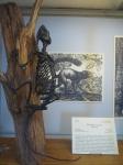 cours de dessin, galerie de paléontologie, muséum,
