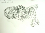 muséum,dessiner,fossiles,paléontologie