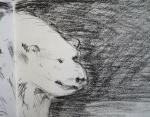 muséum,exposition espèces d'ours,dessiner les animaux,croquis sur le vif