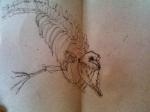 dessiner au muséum,dessiner au jardin des plantes,dessiner les animaux,cours de dessin,cours d'aquarelle
