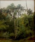 dessiner au Louvre, travailler la couleur, la peinture de paysage, Corot, Daubigny, Théodore Rousseau, peinture du 19ème,