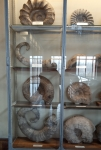 Muséum, dessiner, fossiles, paléontologie,