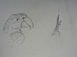 M.2014:10:?? Muriel oiseaux - 4.jpg