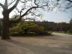 Muséum 14:03:31 arbre de Maud - 2.jpg