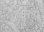 muséum,jardin alpin,cours de dessin,cours de peinture,arbre,serre tropicale,jardin des plantes