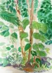 serres du jardin des plantes, plantes tropicales, dessin, croquis, aquarelle, dessiner les fleurs,