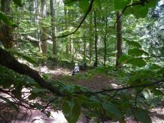 0 stage Trois épis - 05:07:16 bien installées - 2 forêt.jpg