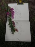 digitale, dessiner les fleurs, la ligne bleue des Vosges,