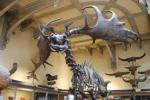 Muséum, galerie de paléontologie anatomie comparée, dessin, croquis