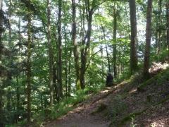 0 stage Trois épis - 05:07:16 bien installées - 5 forêt.jpg