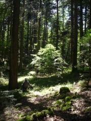 0 stage Trois épis - 05:07:16 bien installées - 6 Forêt.jpg