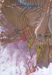 anatomie comparée,dessin d'imagination,interprétation,muséum
