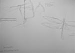 serres du jardin des plantes,dessin documentaires,les cactées,cactus,dessin au crayon