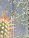 M. photos Muséum - lignes petites: droites: anguleuses.jpg