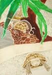 ménagerie du jardin des plantes,singe,tortue,dessin,croquis,coquelicots