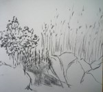 dessin, peinture, cours de dessin, cours de peinture, aquarelle, dessiner sur le vif, fusain, crayon, pastel, dessiner la nature, Pornic, Paris,