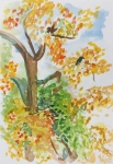 jardin botanique, jardin des plantes, Muséum, dessiner la nature, carnard col-vert, feuilles de lotus,