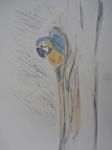 M.2014:10:?? Muriel oiseaux - 5.jpg