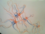 exposition Océan, dessienr au Muséum, jardin des plantes, cours de dessin, dessiner d'après réel, dessiner sur le motif