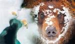 exposition, espèces d'ours, muséum, dessin, croquis, dessiner la nature, dessienr les animaux,