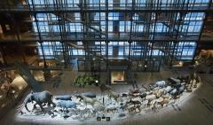 grande galerie de l'évolution,dessiner au muséum