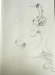 dessiner au jardin des plantes, dessiner la nature, dessiner les fleurs, cours de dessin, galerie de botanique ,