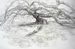 Muséum 14:04:07 Maud cerisier  - 3.jpg