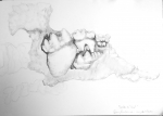 muséum,dessiner,fossiles,d'Orbigny, paléontologie
