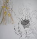 jardin des plantes,dessiner les plantes