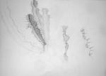 dessiner dans les serres,cours de dessin,dessiner la nature