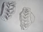 dessiner au muséum,dessiner au jardin des plantes