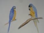 M.2014:10:?? Muriel oiseaux - 8.jpg